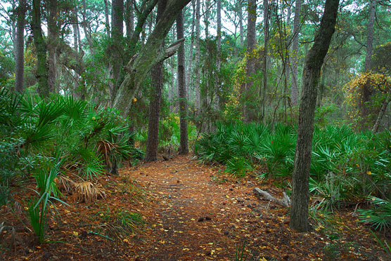 Hunting-Island-State-Park-Trail