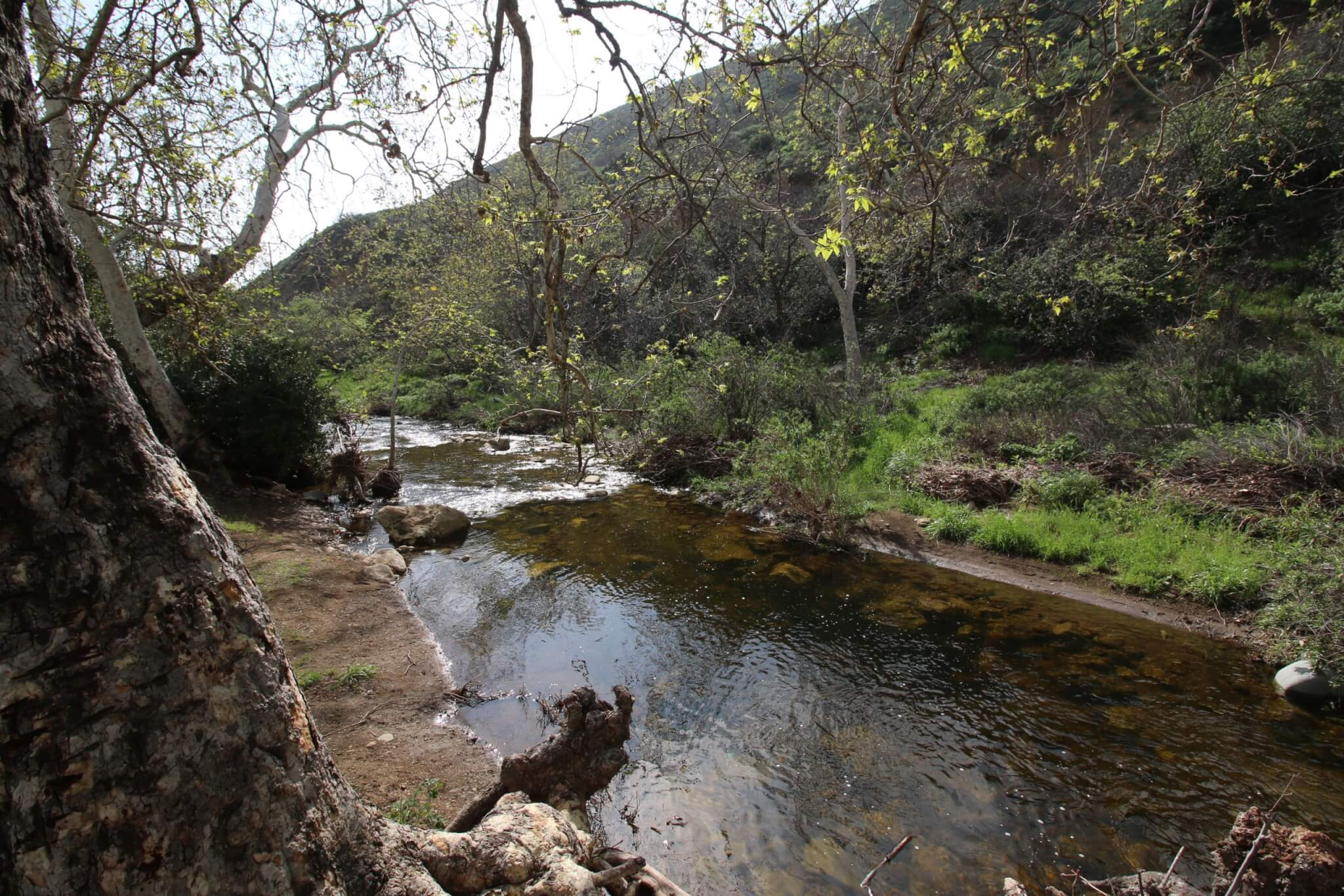 Southern California's Best Campgrounds - Leo Carrillo Creek View