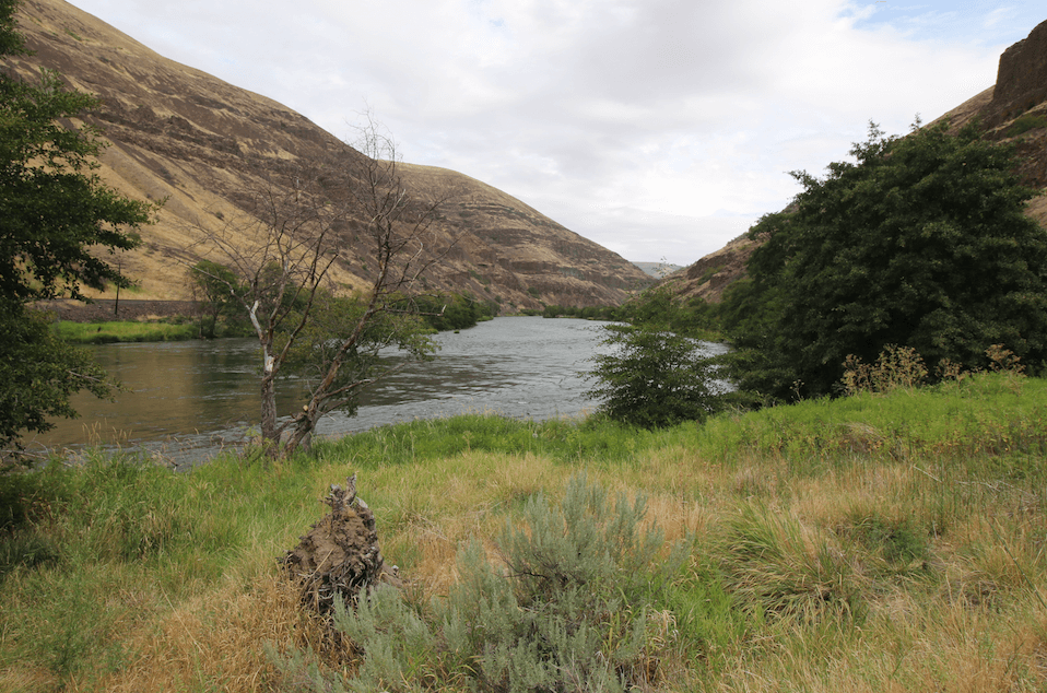Best Lower Deschutes River Campgrounds - Jones Canyon River View