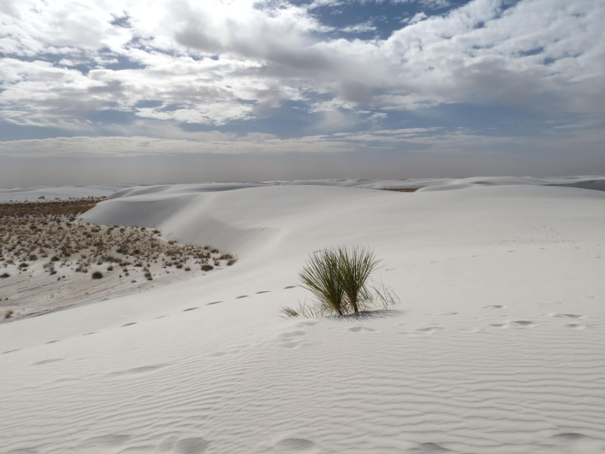 U.S. National Park Status COVID-19_White Sands NP
