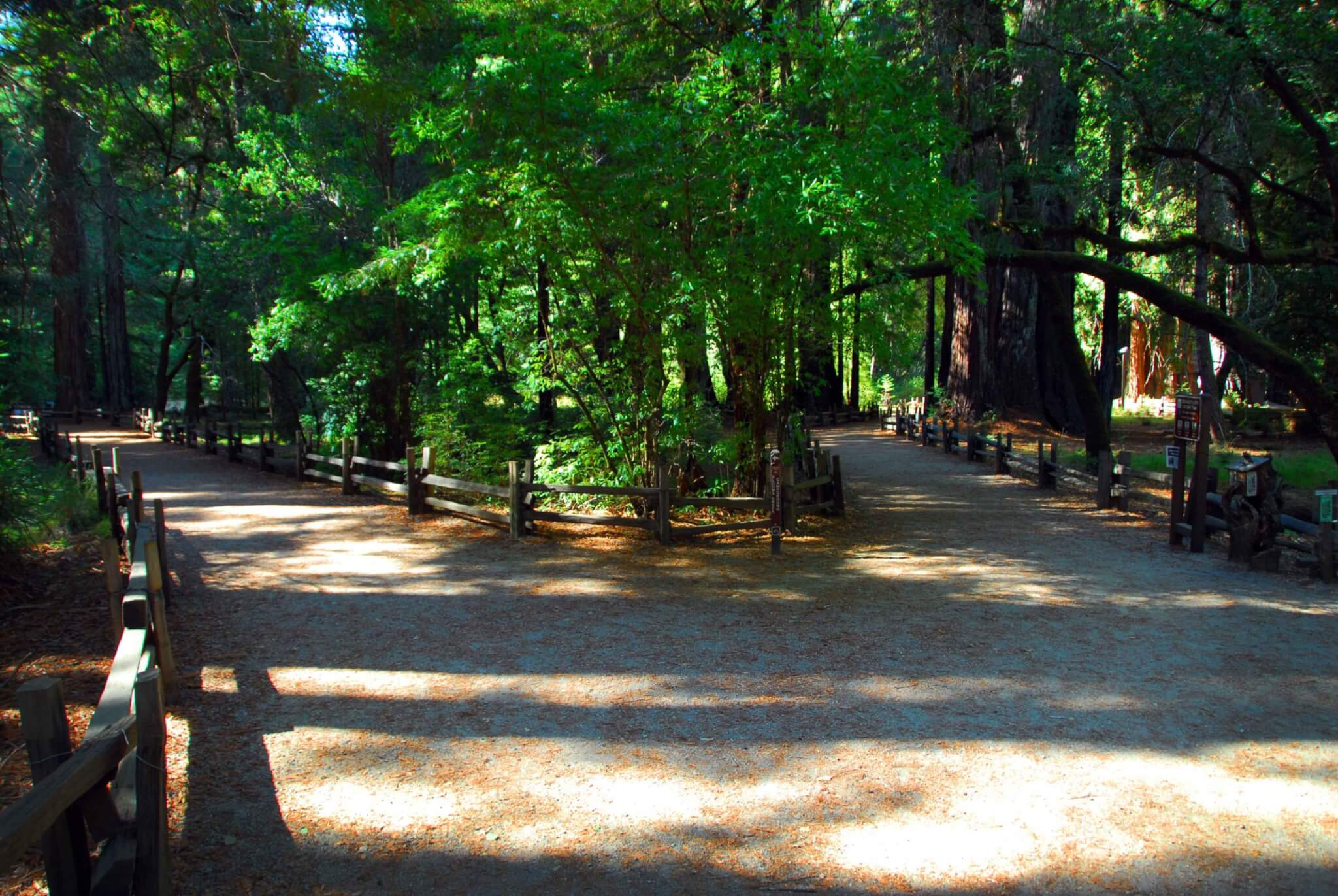 California Opens Campgrounds in 28 State Parks - Big Basin Redwoods State Park