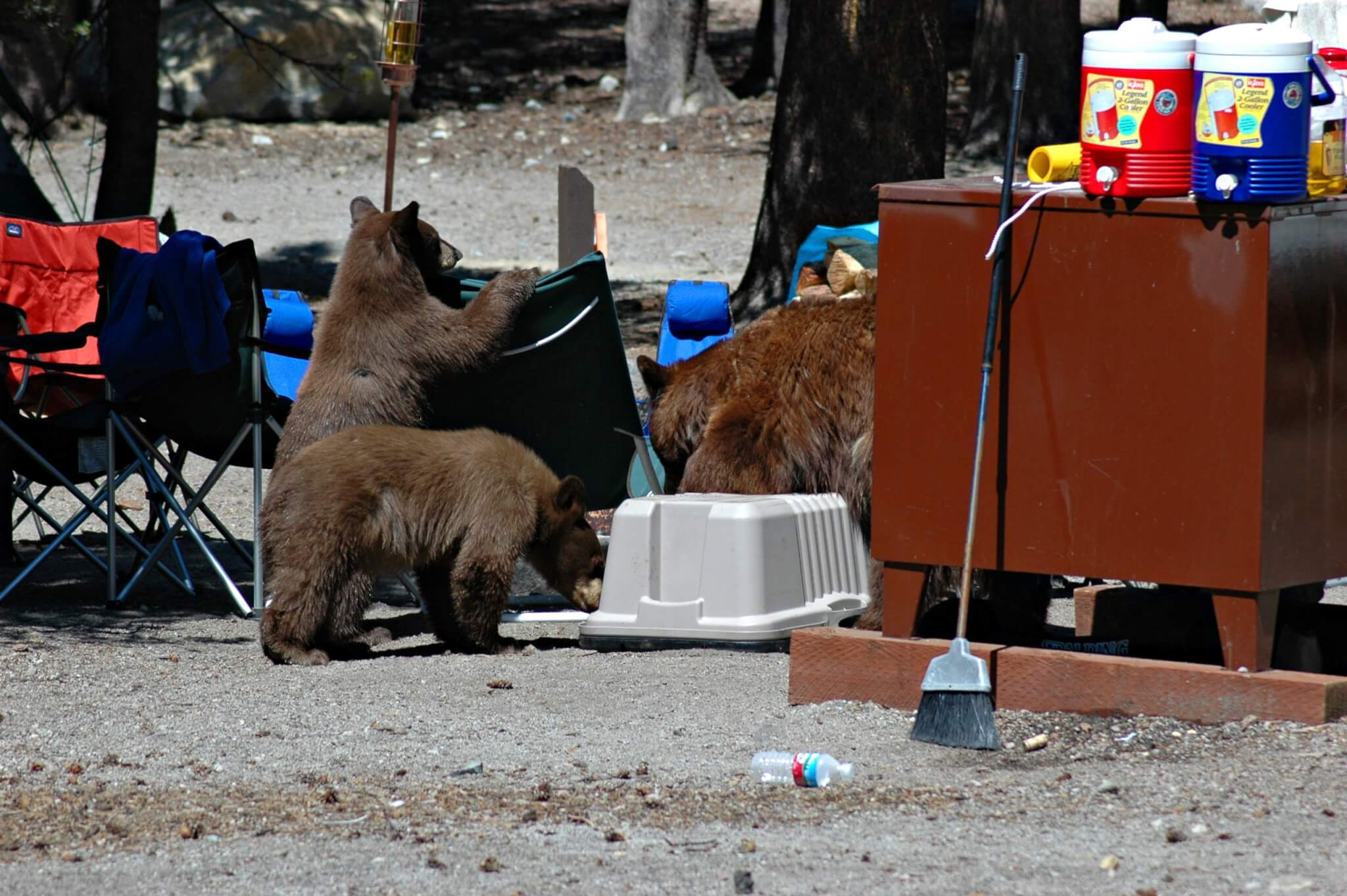 How to Hike & Camp Safely in Bear Country-Lake Mary Bears