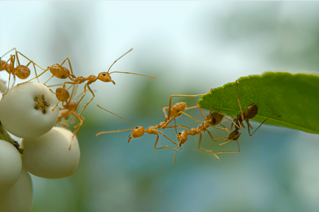 Keep Ants Out of your Campsite and RV-3