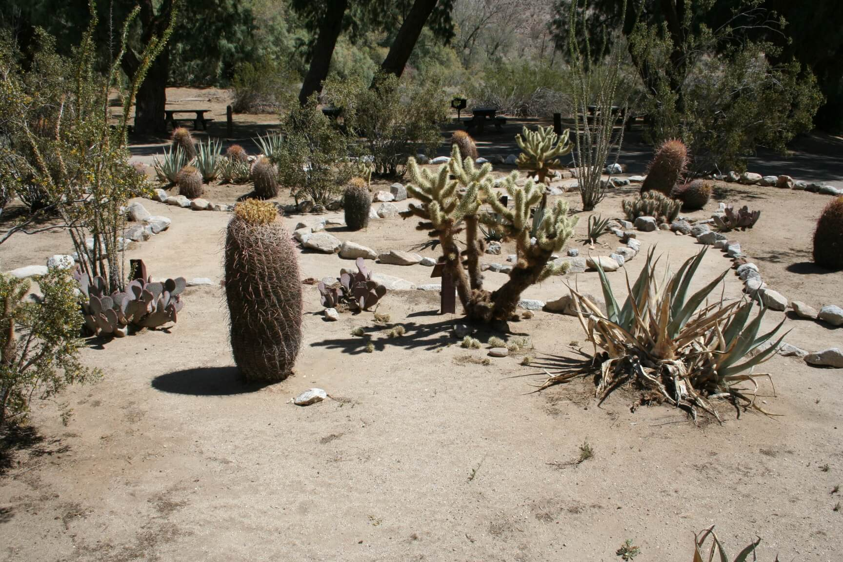 Southern California's Best Campgrounds - Tamarisk