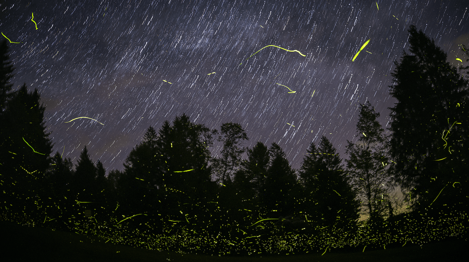 Best Place to See Synchronous Fireflies - View 1